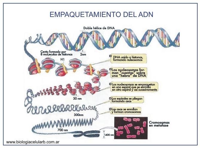 epigenetica 3