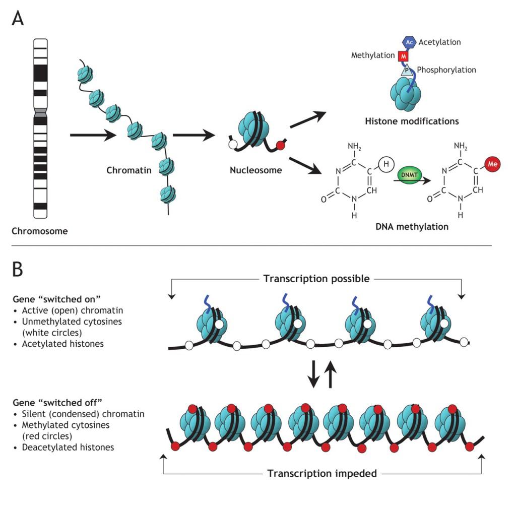 epigenetica 4