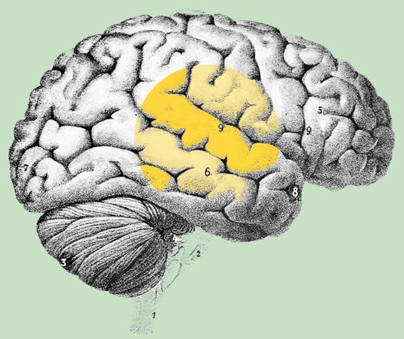 sufragista_cerebro_primera-vocal